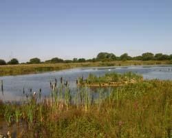 Standlake Common Nature Reserve
