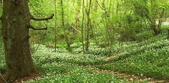 A woodland in Oxfordshire