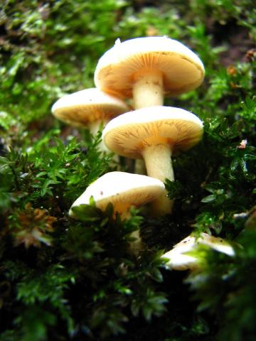 Brede-fungus. Photo by Helen Miller